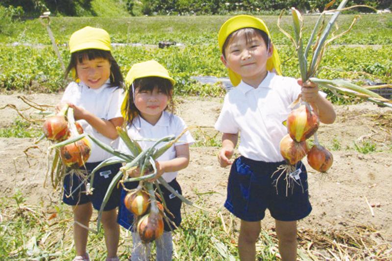 玉ねぎ収穫